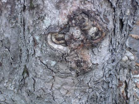 arbre25.jpg