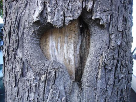 arbre5.jpg