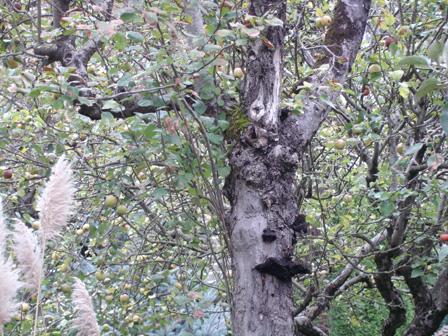 arbreetchampignon.jpg
