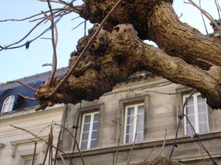 arbre13.jpg