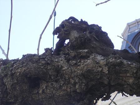 arbre18.jpg
