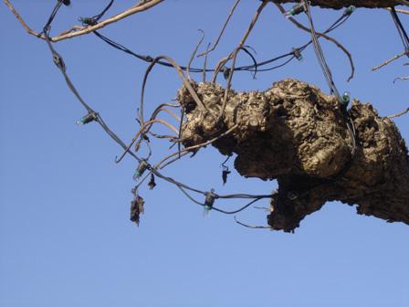 arbre24.jpg