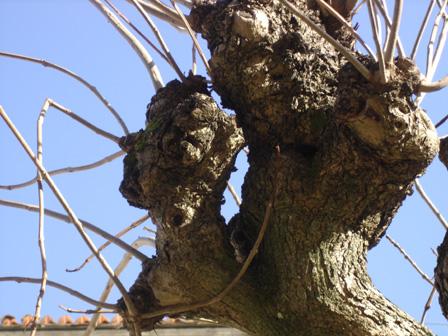 arbre26.jpg