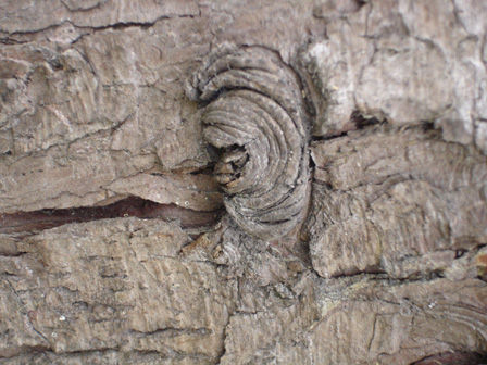 arbre38.jpg
