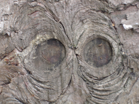 arbre42.jpg