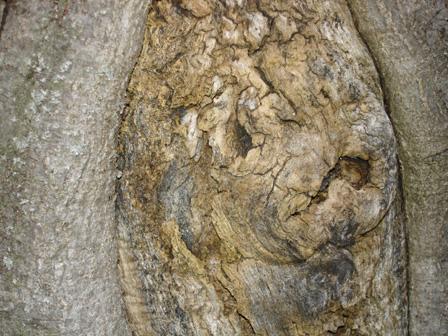 arbre44.jpg