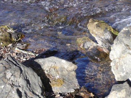 gnomesjanvier07156.jpg