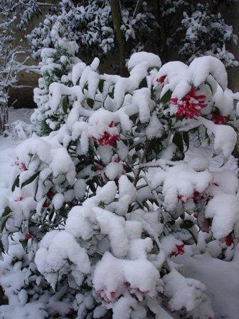jardin11230107.jpg
