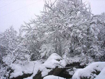 paysage012.jpg