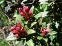 03112rhododendrons.jpg
