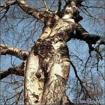 arbrestworekkawaa.jpg